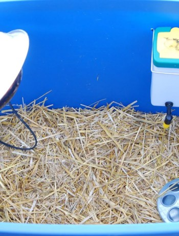 Easy DIY chick brooder
