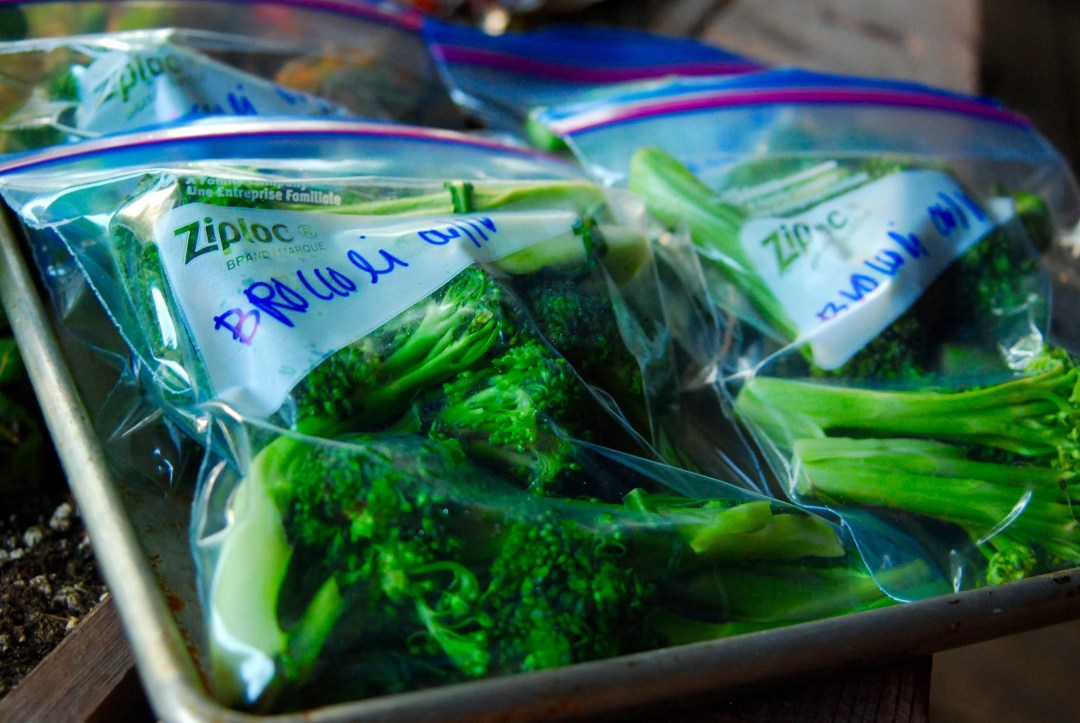 Broccoli ready for the freezer