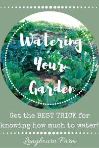Are you watering enough? Too little? Too much? Check out this post for the one and only watering trick you'll ever need to make sure your garden grows it's best and you use your resources wisely!