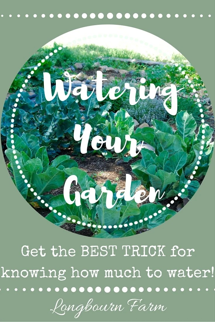 How often should I water my garden? Get the only watering trick you'll ever need to ensure your garden is productive and you're using your water wisely!