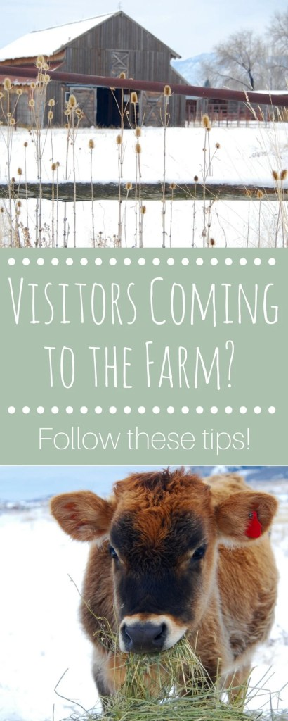 Visitors coming to the farm? Follow these simple tips to ensure everyone stays safe and has a great time - even if they ask hard questions!