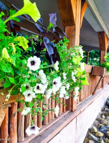 Deck planters full of sweet potato vines and petunias.