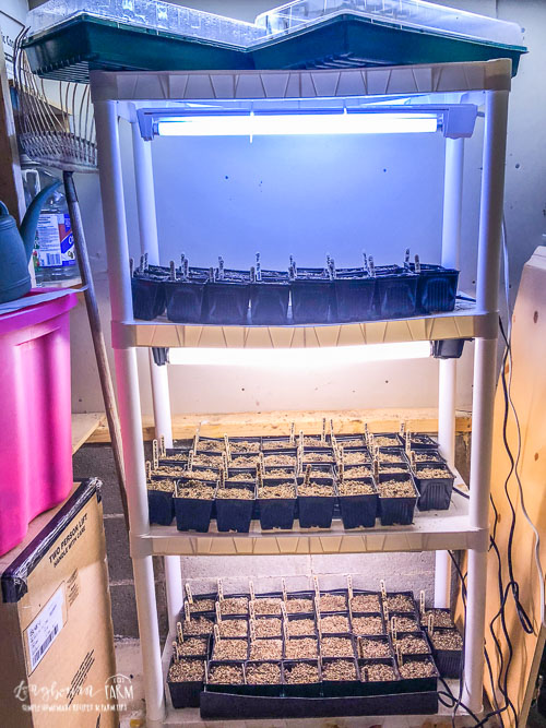 Shelving unit with lights on each shelf and seedlings growing beneath them.