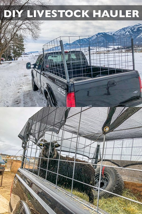 Save money by building your own DIY sheep trailer and livestock hauler! Large enough for multiple small animals and even a calf or two. #longbournfarm #sheep #goats #livestock #trailer #livestocktrailer #sheeptrailer #livestockhauler #goattote