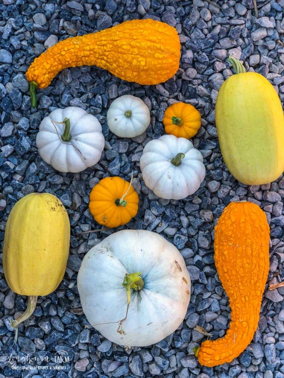 Assortment of winter squash.