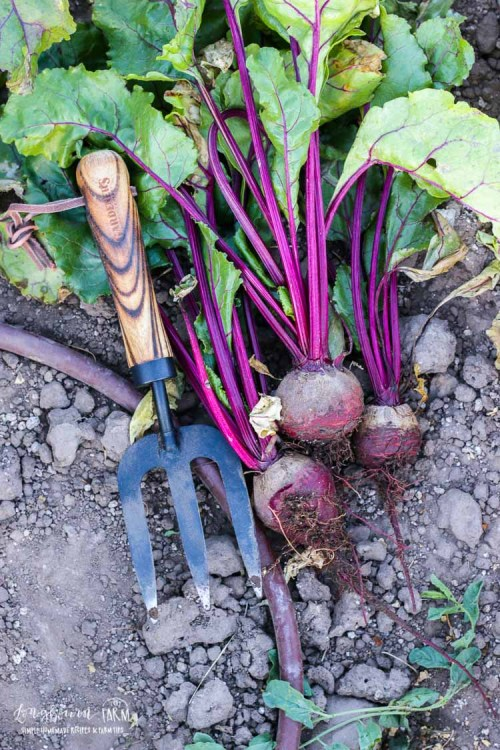Gardening Gift ideas, a tool set from Gardener's Supply Company.