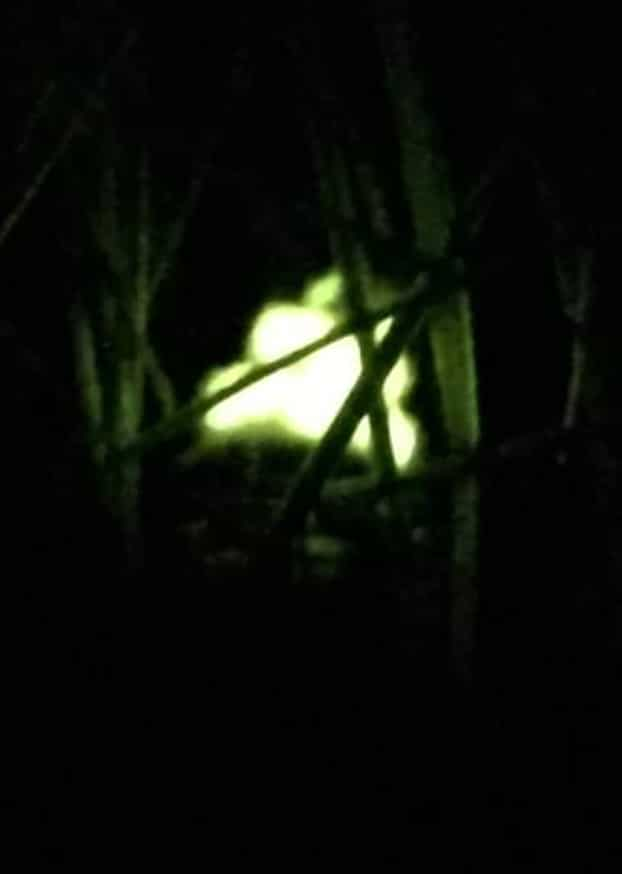 Glow of a glow worm at night