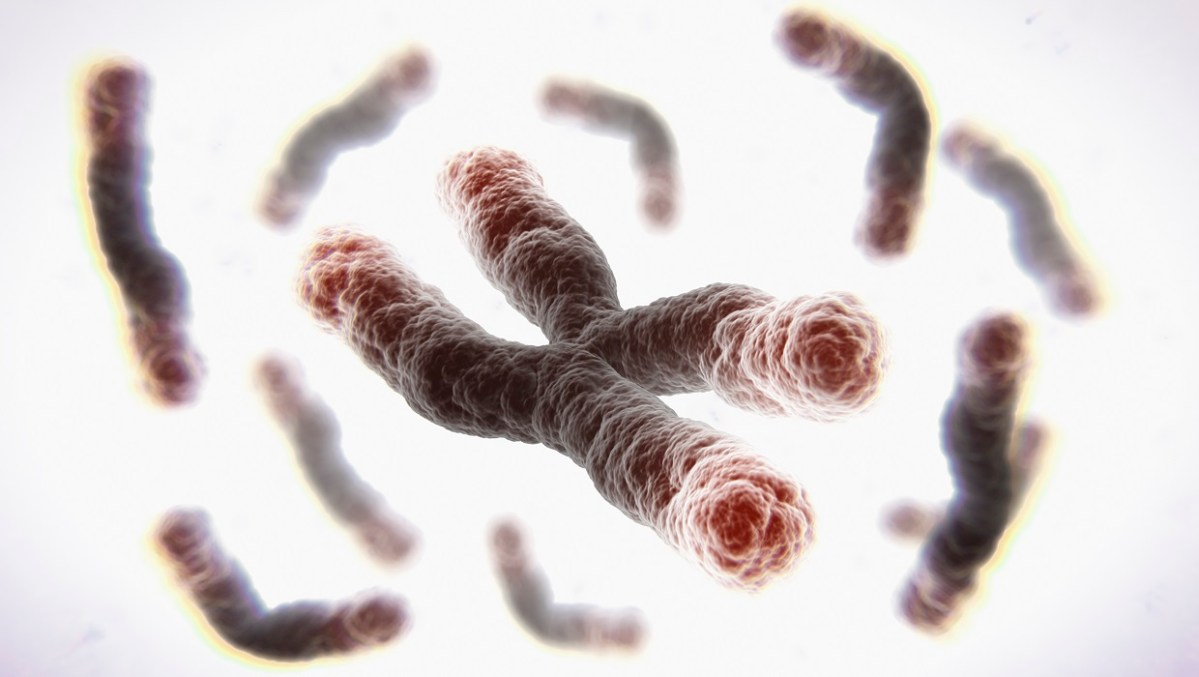 New RNA Telomere Therapy Reverses Aging