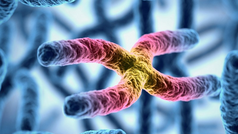 Can we lengthen telomeres to stop aging?