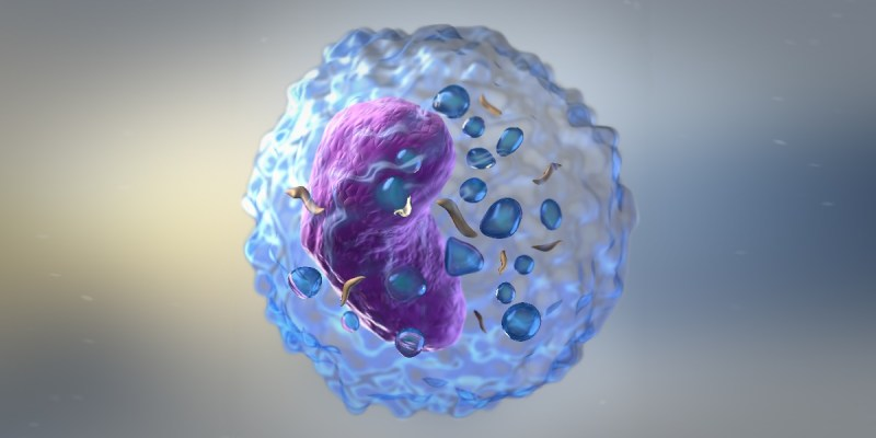 Cellular Garb-aging