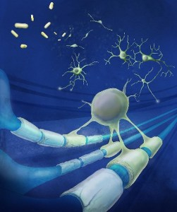 drugs stimulate brain stem cells to repair multiple sclerosis.