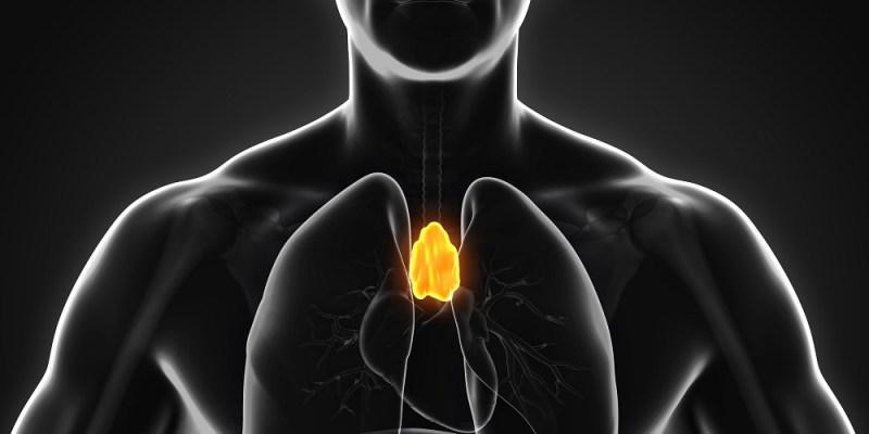 restore thymus function regrow thymus