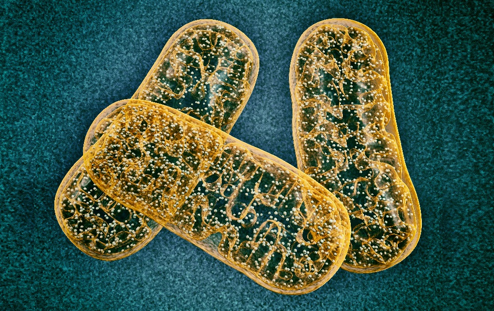 Researchers Discover Key to Diseases in Mitochondrial DNA Mutations