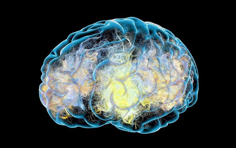 Researchers find key underlying Alzheimers disease.