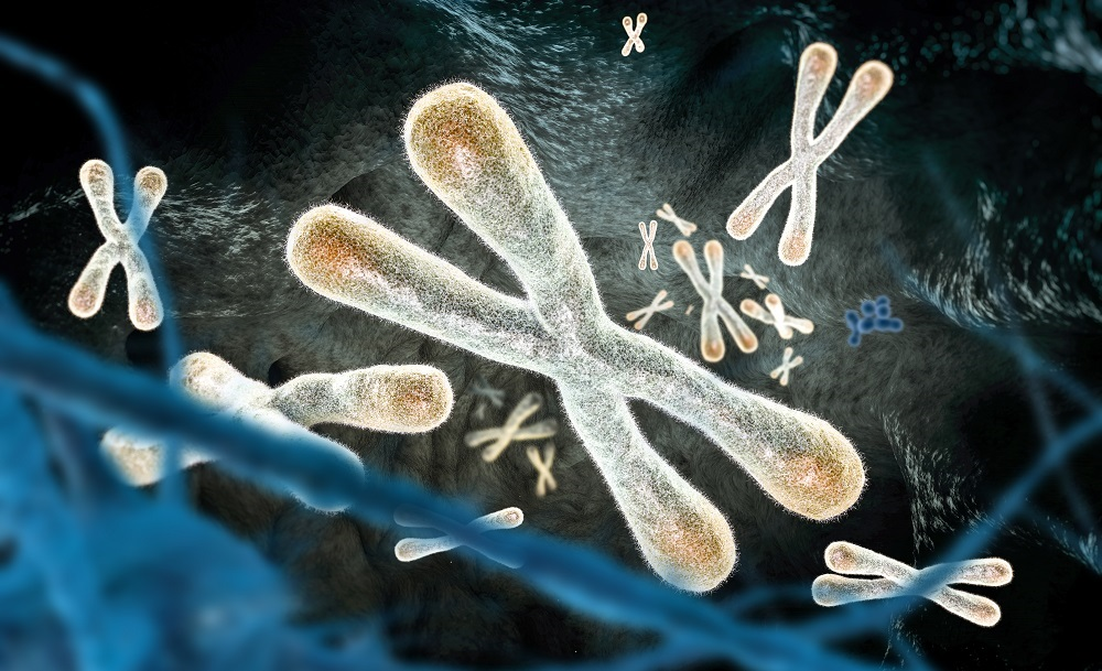 Does our telomere length play a role in our health? (a look back)