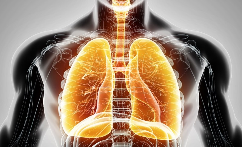 Lung regeneration using stem cells