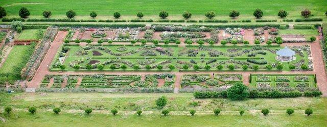 The beautiful National Rose Garden at World Heritage Listed Woolmers Estate, not far from the Racecourse Inn.