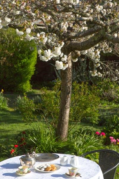 Afternoon tea under the flowering apple at The Racecourse Inn, Longford, Tasmania