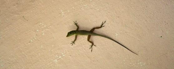 detail-lizard