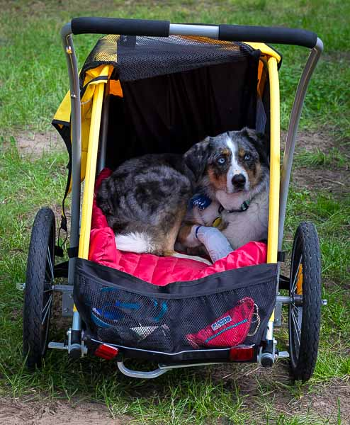 Gear Review: Burley Tail Wagon | Long Haul Trekkers