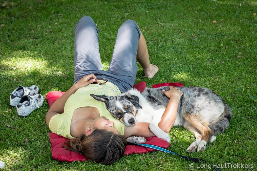 Loft Wander Dog Bed