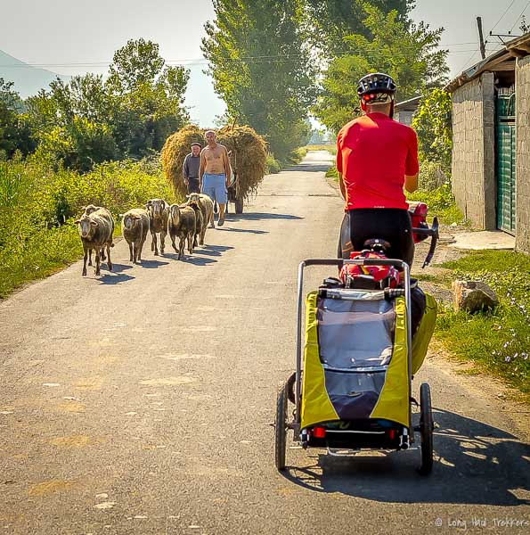 Sharing the road with sheep or horse-drawn carriages was a common occurrence.