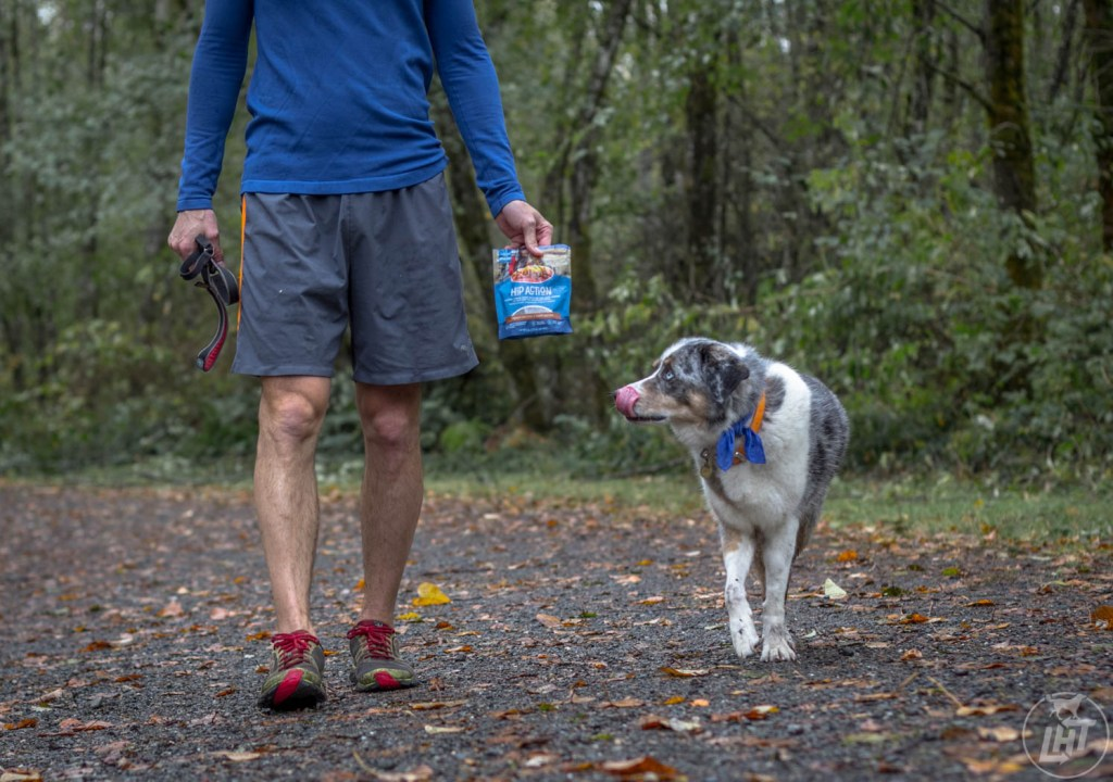 Always take the opportunity to train your dog on walks, hikes, or at the park.
