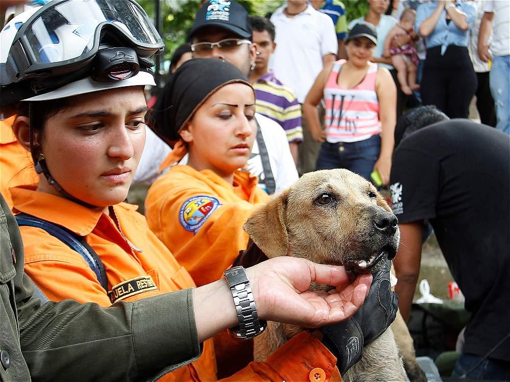 Dog Adoption Medellin Colombia