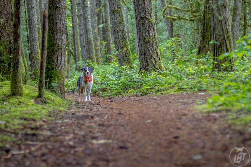Hiking along the McKenzie River Trail from Belknap Hot Springs.