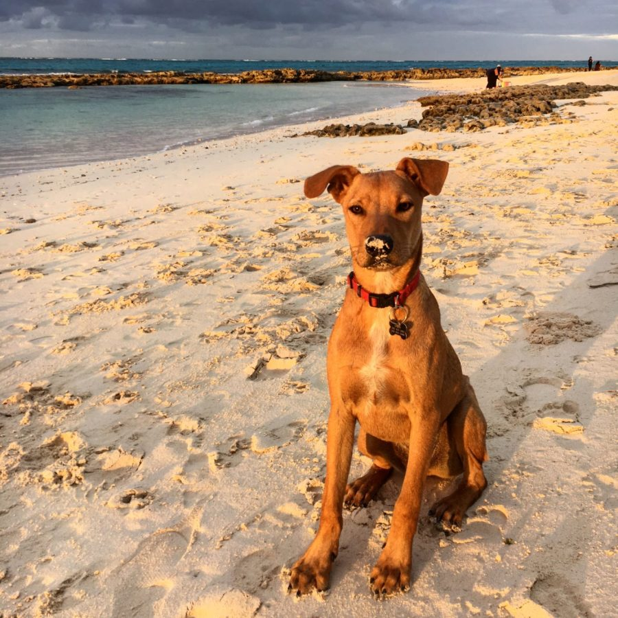 "Street Tails: Barley, Jackson, and Finley. Stories of rescue animals from around the world. This interview features three rescues, including two ""potcakes"" from the Bahamas. 