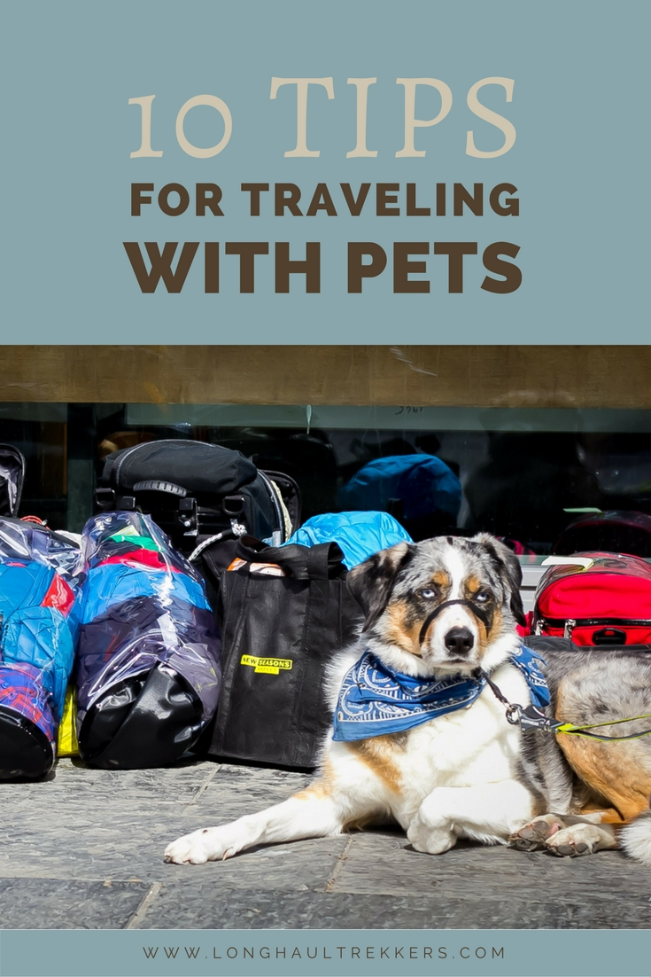 10 Tips for Traveling with a Pet - Pinterest Banner