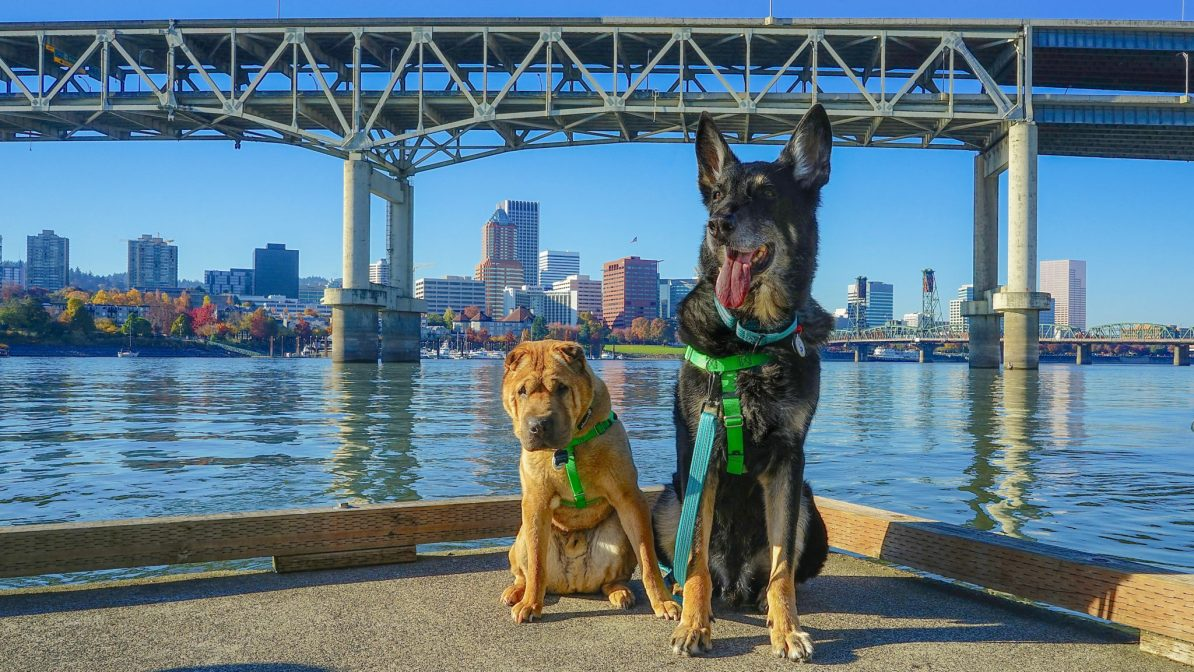 Ty and Buster of GoPetFriendly.com loved the Portland waterfront.