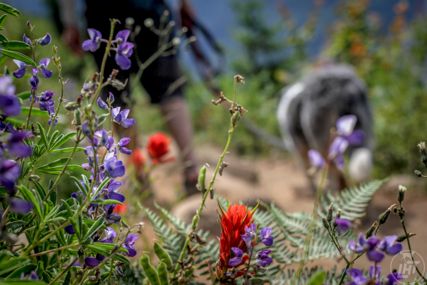 Need ideas for getting outside with your dog? The 52-day adventure dog challenge will get you outdoors for an entire year. Go wildflower hunting.