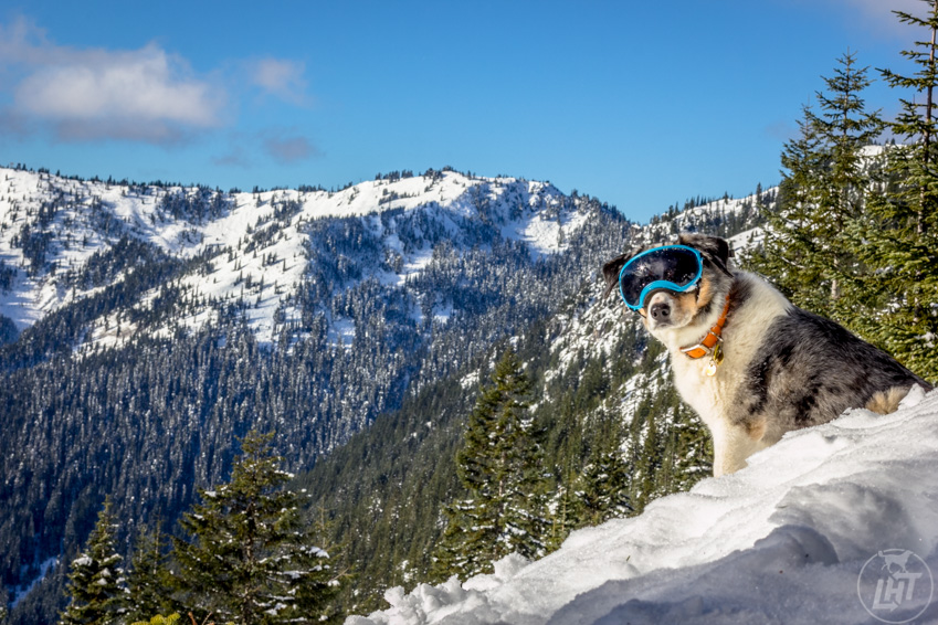 Dog goggles, like RexSpecs protect the eyes from bright sun reflecting off the snow.