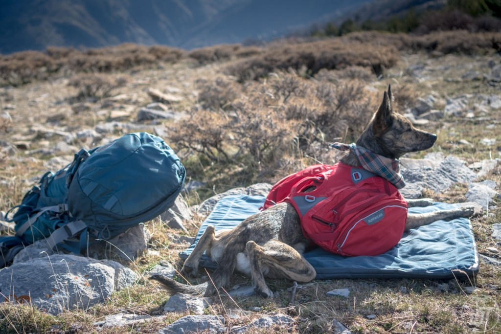 A lightweight travel dog bed is great to bring on a backpacking trip. It'll give your dog a comfortable place to sleep and keep them warmer in tent.