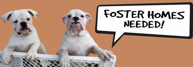 Home Page - Long Island Bulldog Rescue