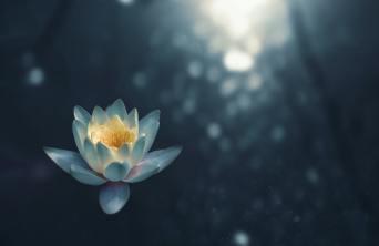 Lotus unsplash