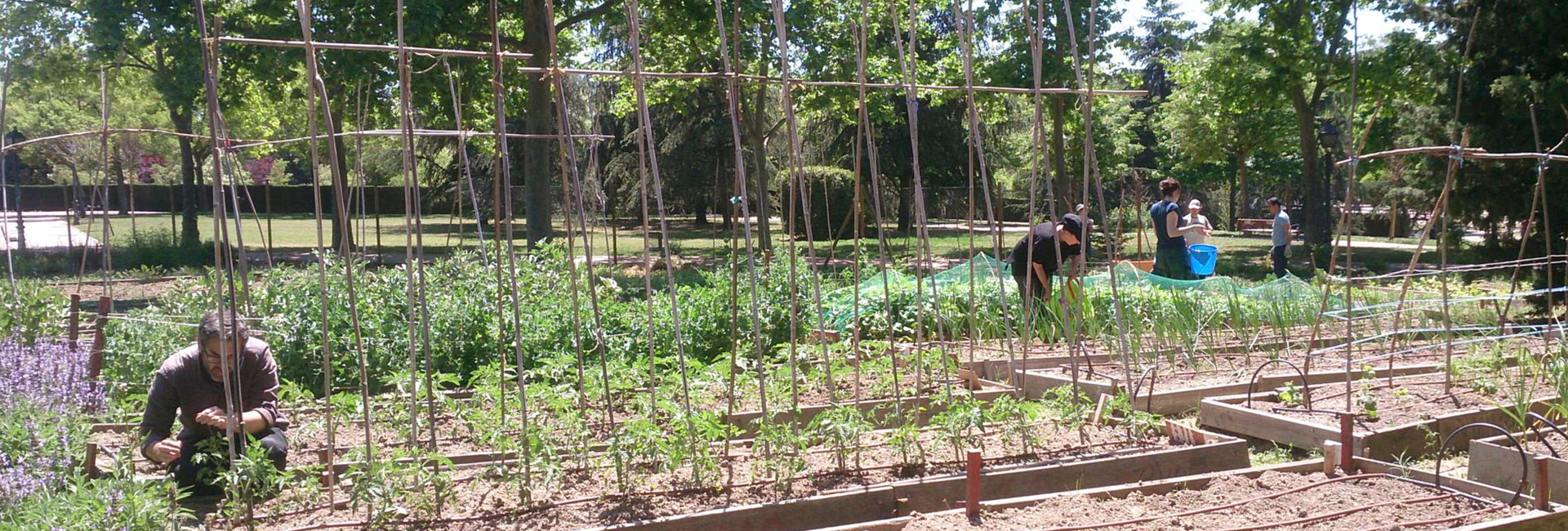 Working in Bombilla community garden