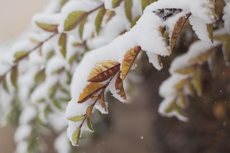 Snow, Death and Politics