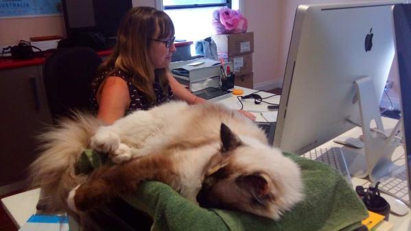 Bella keeps Vanessa company at work
