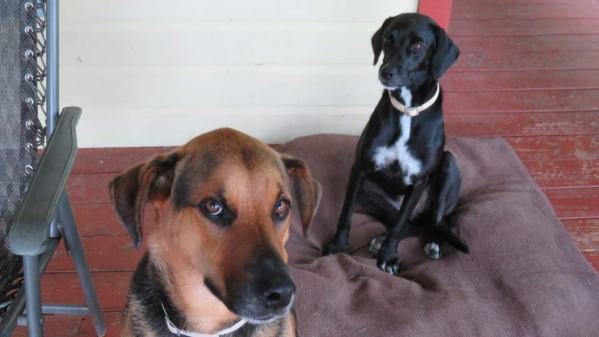 Turbo and Rosie - our two dogs in Panama - full of character