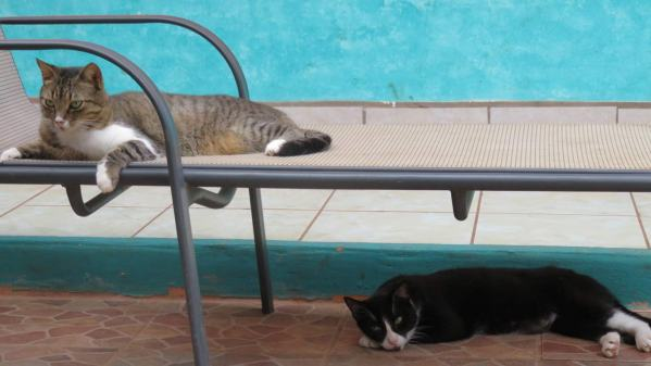 """""""What are you talking about? Of course the sun lounger is for us to use!"""""""