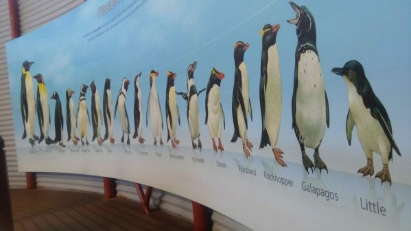An amaing diversity of penguin species