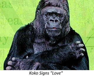 Learn to Love Koko