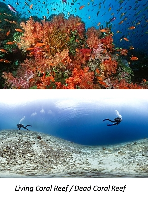Warming and acidification destry ocean coral reefs