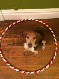 This is the only trick he knows! Honestly, the hoop looked a lot like this when I was hooping too - on the floor.