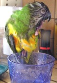 My Parrot Penny
