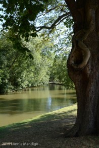 The River Cherwell 20130902-06