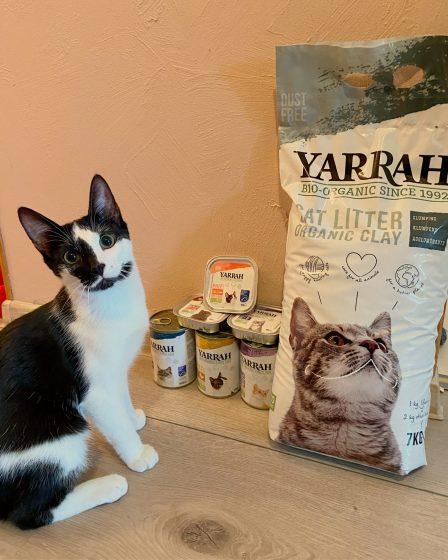 kass ja Yarrah tooted