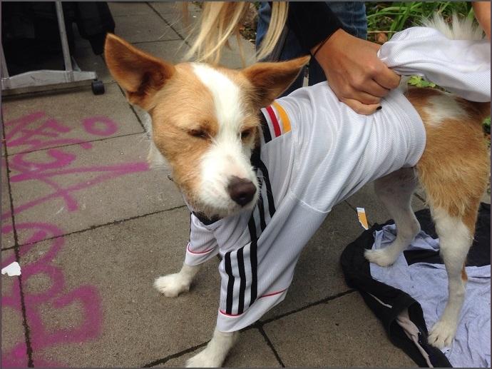 Hund Eduard, der ein Deutschland Fussball Trikot trägt